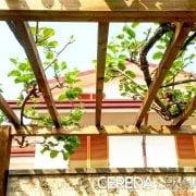Pergolato in legno di Cereda Legnami